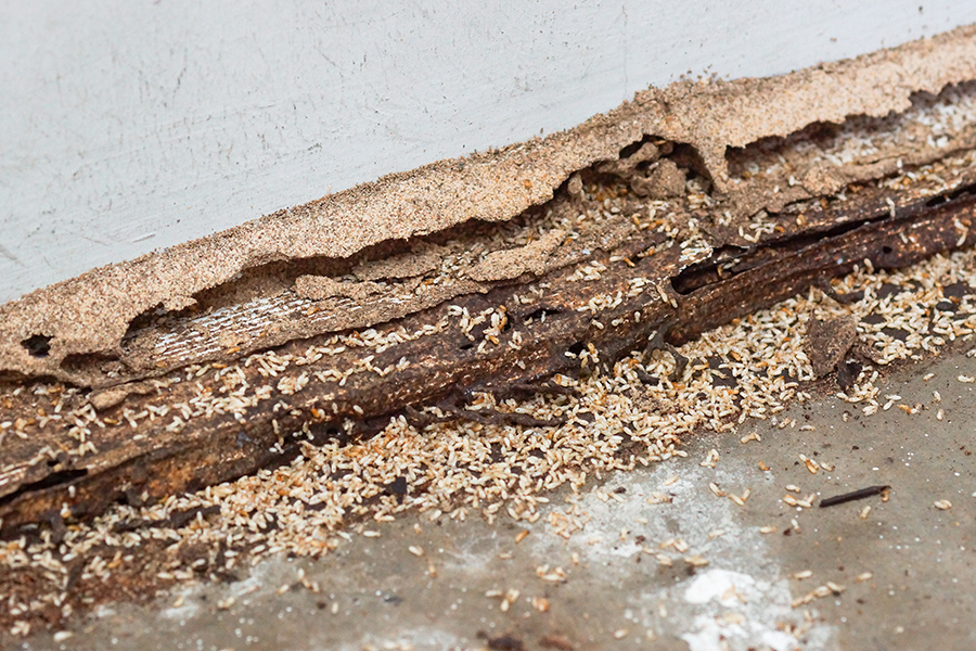 Termites causing serious wood damage discovered while preforming home inspection services